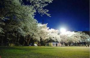 さくら咲く学校夜桜
